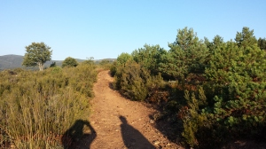 Camino215 257