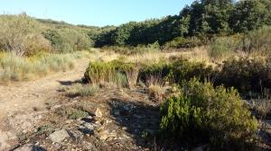 Camino215 259
