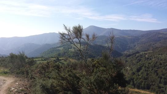 Camino215 335