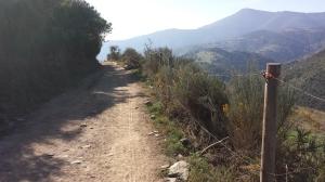 Camino215 336