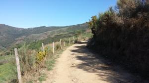 Camino215 337